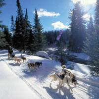 Dog sledding in Ontario wilderness trails on the Classic Canadian Winter Adventure