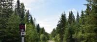 Quiet trail along le P'tit Train du Nord | Nathalie Gauthier