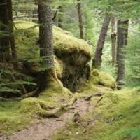 Walking through rainforest | Nathalie Gauthier