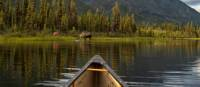 Wild views from the bow on the Yukon River