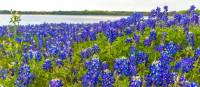 See the famous Texas bluebonnets when cycling in spring | Jaime Hudson