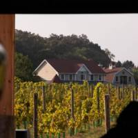 The North Fork of Long Island is known for its vineyards