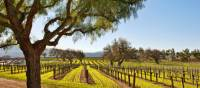 Cycling past vineyards in the Santa Ynez Valley. | Jay Sinclair/Visit Santa Barbara