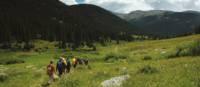 Beautiful views of the green scenery in Yellowstone National Park | Sue Badyari