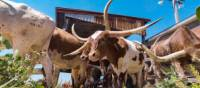 Discover Texas by bike, where the Wild West begins | Travel Texas