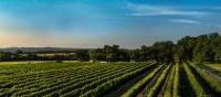 Cycle through the Texas wine country near Fredericksburg