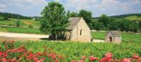 Vineyards near St. Romaine